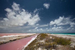 Bonaire-Pink-Beaches