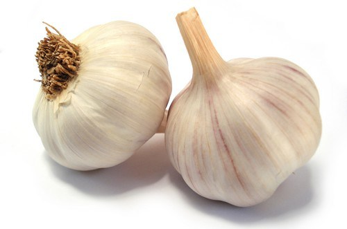 Garlic-control-BP