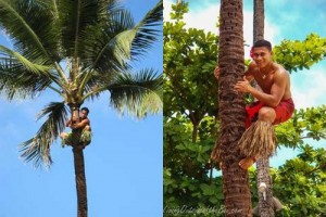 championship-on-climbing-to-palm-trees