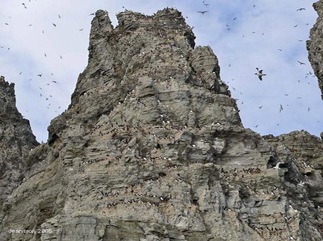 আর্কটিকের মধ্যে শীর্ষ ৫টি পাখির পাহাড়