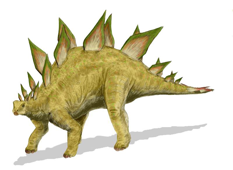 Stegosaurus_BW
