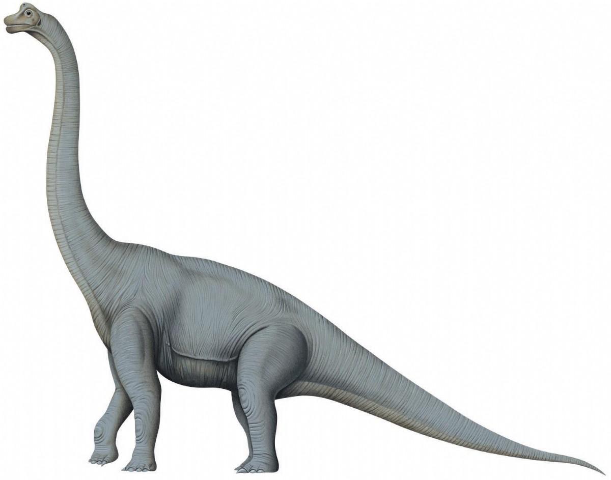 brachiosaurus-2